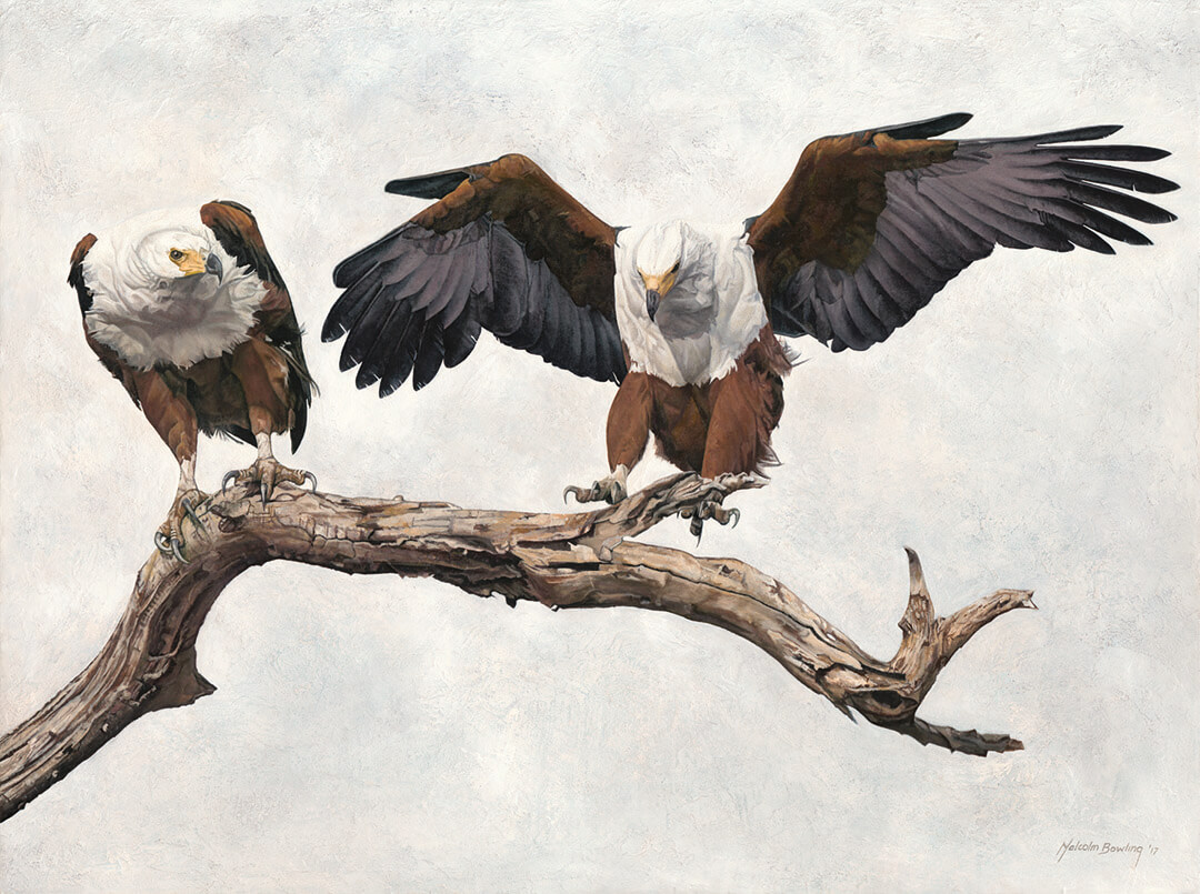 African Fish Eagles oil painting by Malcolm Bowling