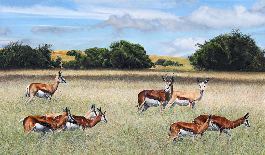 Coffee Springbuck in the Eastern Cape oil painting by Malcolm Bowling