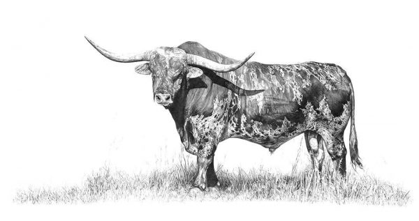 Texas Longhorn by Malcolm Bowling
