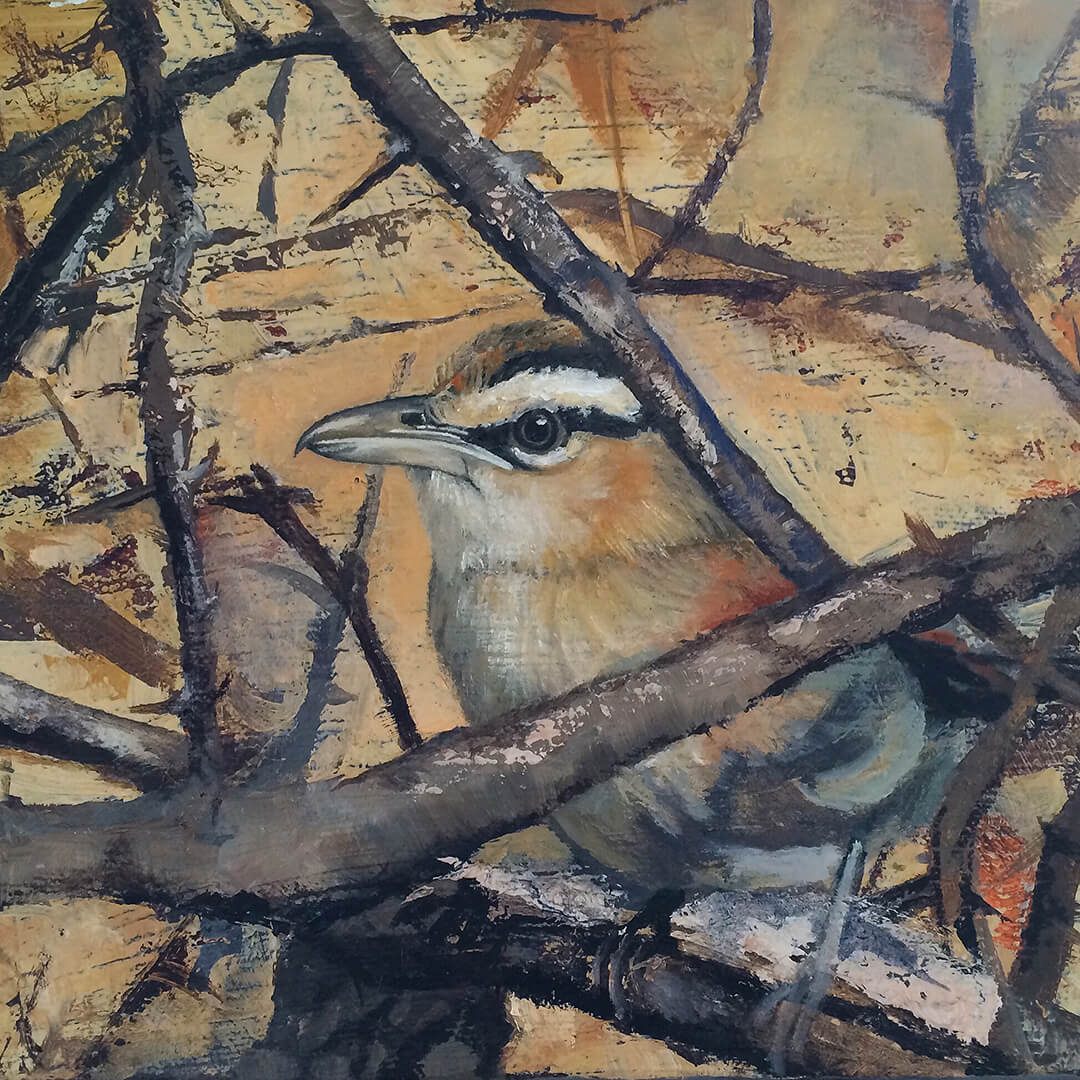 Black-crowned Tchagra oil painting by Malcolm Bowling