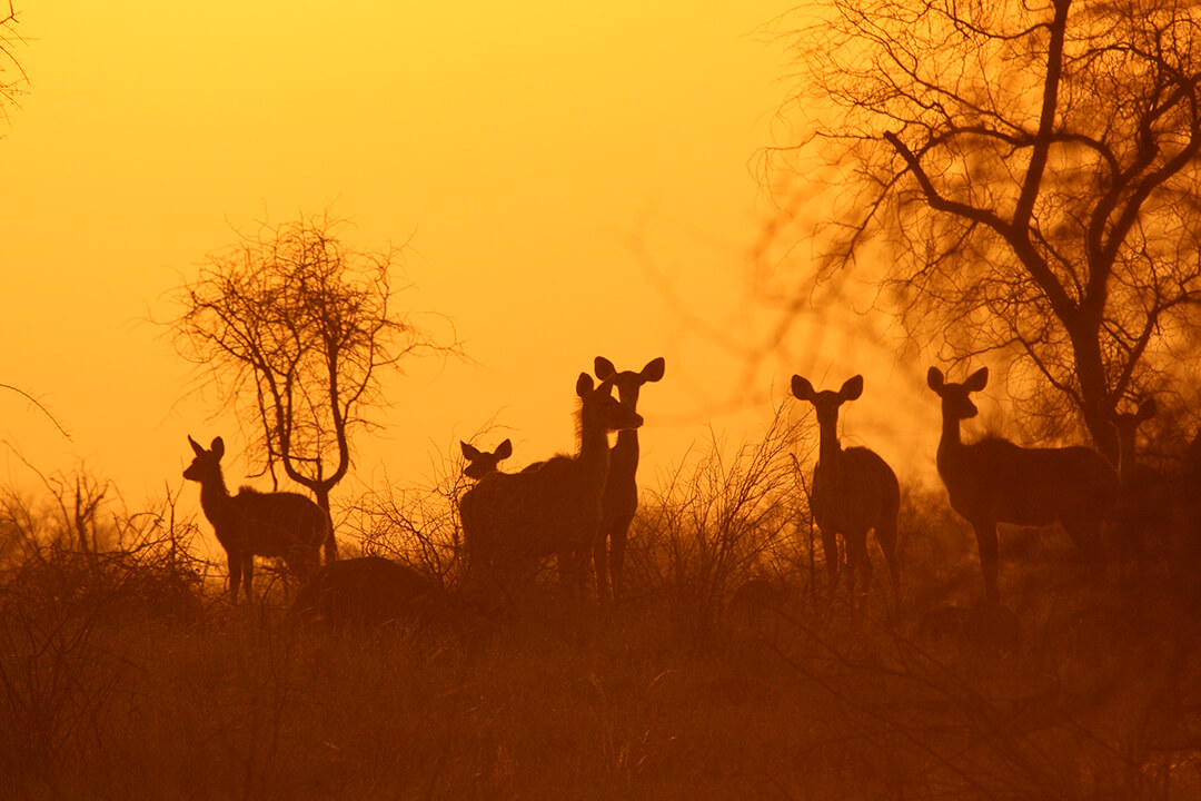 Kudu sunset 1 - photograph by Malcolm Bowling