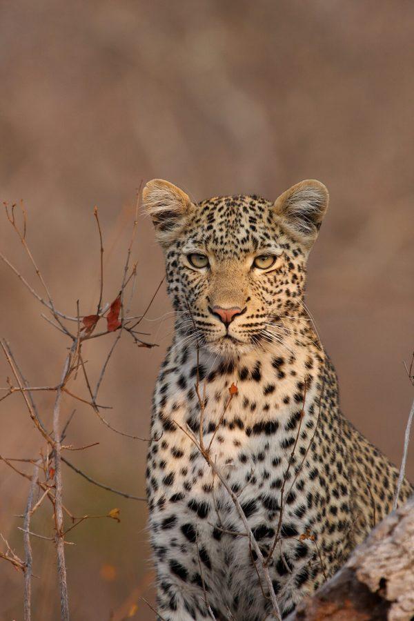 Kwela kwela - photography by Malcolm Bowling