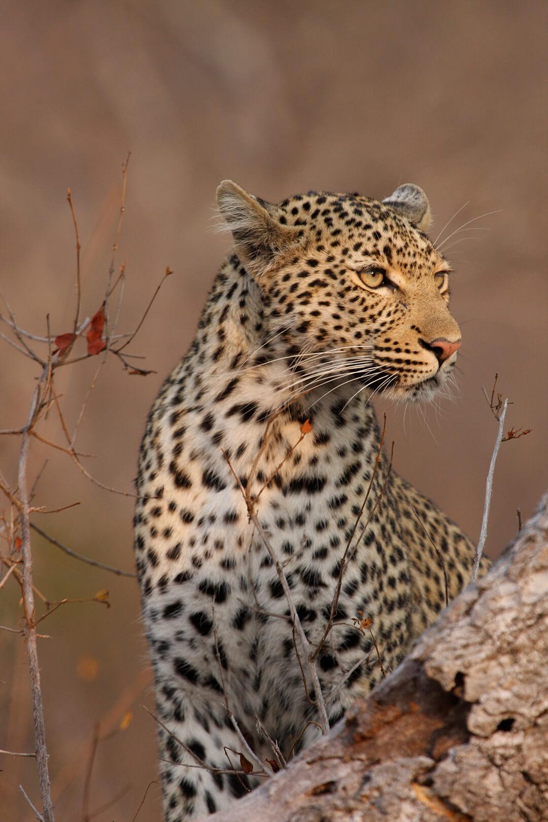 Kwela kwela 2 - photograph by Malcolm Bowling
