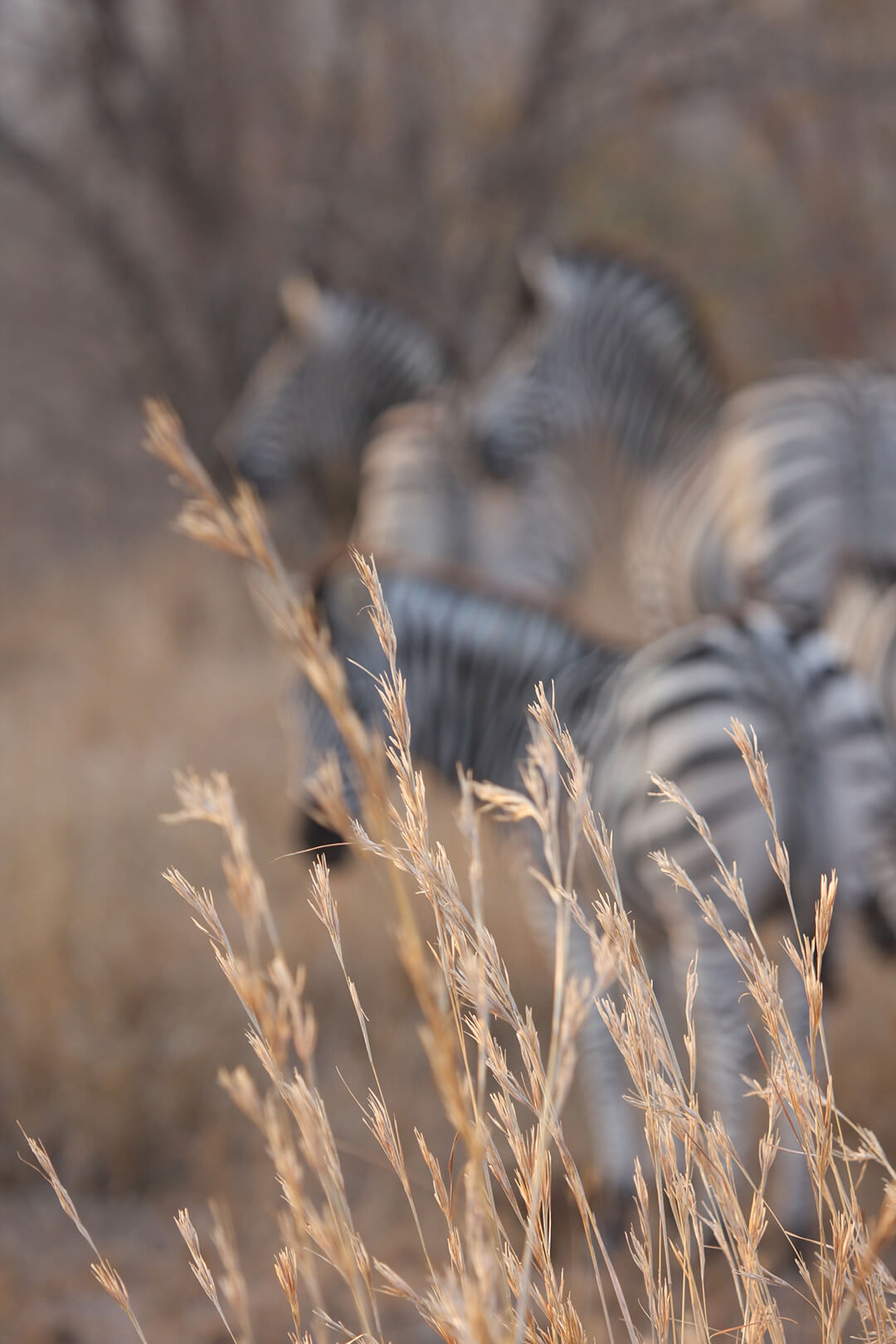 Stripes in the long grass by Malcolm Bowling