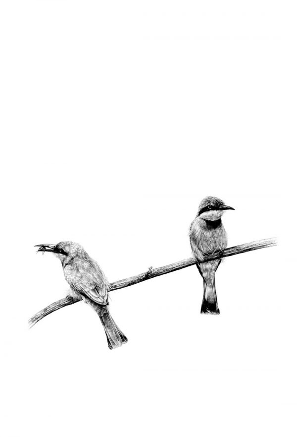 Two bee eaters print by Malcolm Bowling