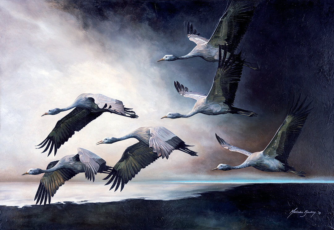 Into The Light - Blue Cranes canvas print by Malcolm Bowling