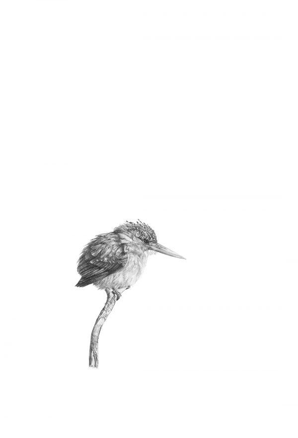 Malachite Kingfisher by Malcolm Bowling