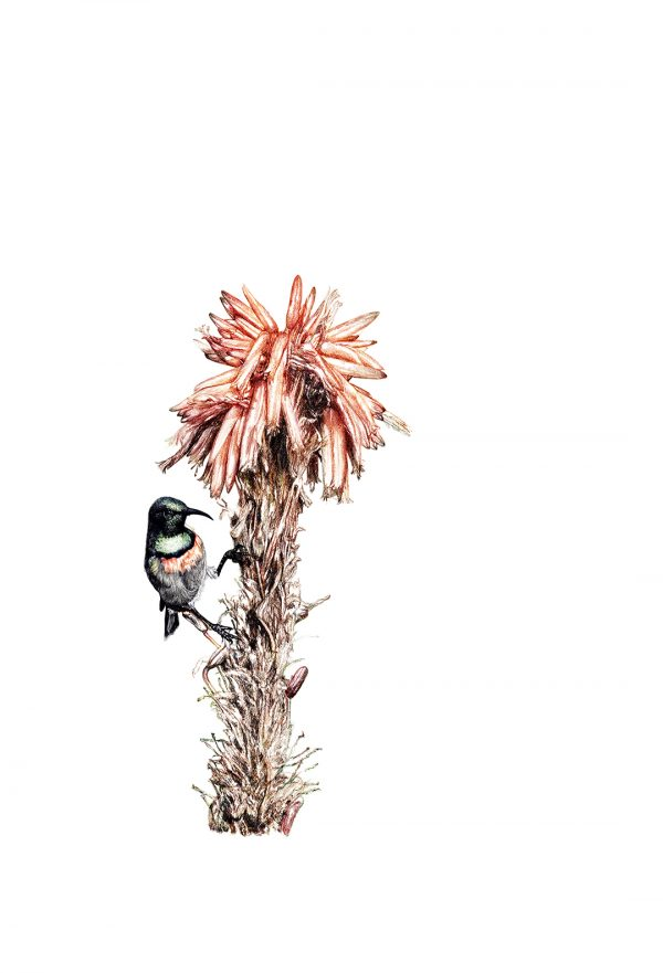 Sunbird by Malcolm Bowling